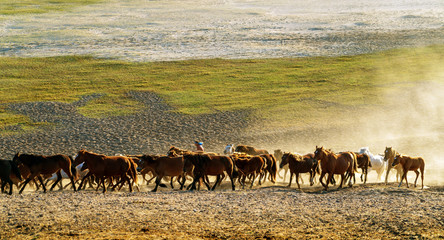 Running a group of horses
