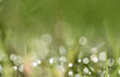 Bokeh background dew drops on grass.