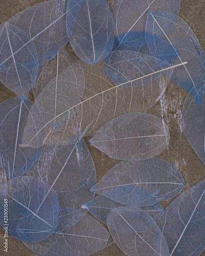 tile, blue transparent leaves - 230051569