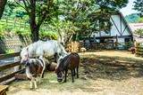 牧場の馬のイメージ - 230053127