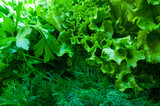 Green Salad background and bunch of fresh organic dill - 230076762