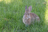cute rabbit on the grass