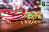 Marijuana buds, hemp seeds, and peppermint candy canes with bokeh lights - 230106576