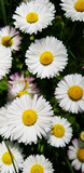 flowers arranged and close up spring summer fresh background