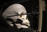 Medical skull for studies - 230139128