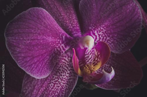 Foto Murales Orchid