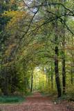 Einsamer Waldweg im Herbst - 230143377
