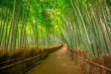 Walkway in bamboo forest at Sagano in Arashiyama. The grove is Kyoto's second most popular tourist destination and landmark. Natural green background. - 230144334