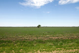 Rural Scene - 230150307