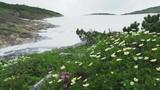 チングルマの花と雪渓を渡る冷気 - 230170980