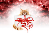 ginger cat showing gift package with red ribbon bow, isolated on christmas red blurred lights background, signboard or gift card for pet shop or vet clinic - 230188327