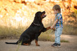 Leinwanddruck Bild - big dog breed Rottweiler gives a paw to a little boy
