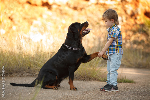 Leinwanddruck Bild big dog breed Rottweiler gives a paw to a little boy