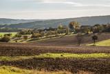 Herbstlandschaft im Burgenland (A) - 230194736