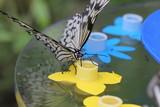 fotos de mariposas y insectos varios