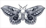 Hand drawn butterfly tattoo. Dotwork tattoo. Automeris Randa. Mystical symbol of freedom, beauty, life, perfection