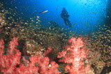 Scuba diving on coral reef underwater    - 230215545