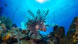 Curacao Underwater world - 230218580