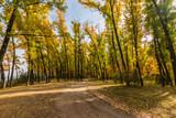 dirt road runs through the autumn forest