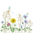 Summer wildflowers background. Grass, dandelion, clover, cornflowers. Print on paper or textile. - 230237566