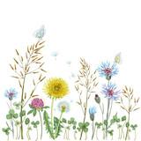 Summer wildflowers background. Grass, dandelion, clover, cornflowers. Print on paper or textile.