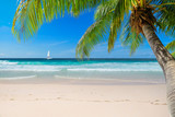 Untouched sunny beach with palm and a sailing boat in the turquoise Caribbean sea on Jamaica Caribbean island. - 230245176
