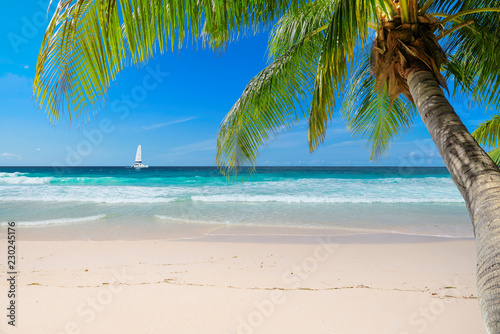 Untouched sunny beach with palm and a sailing boat in the turquoise Caribbean sea on Jamaica Caribbean island.