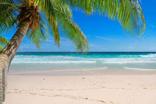 Leinwanddruck Bild Vacation sandy beach with palm and turquoise sea.  Summer vacation and tropical beach concept.