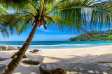 Fototapeta Landscape - Tropical Beach. Sandy beach with palm and turquoise sea. Summer vacation and tropical beach concept. © lucky-photo