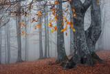 Sonbaharda sisli orman görünümü - 230246931