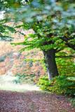 Autumn forest. Italian landscape. - 230279582