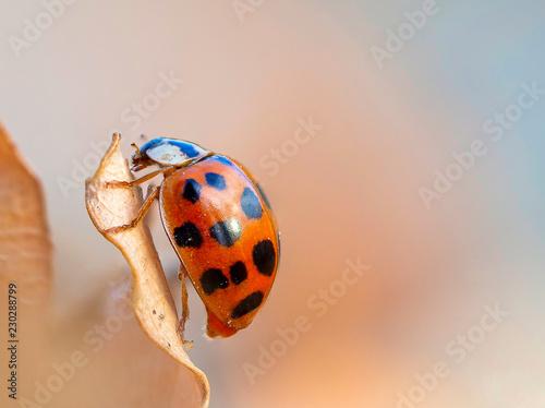 Beautiful macro shot of a lady bug