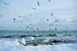 seagulls fly over the winter sea
