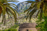 Stone Wall Under Palm Trees in Montenegro