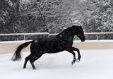 black stallion in snow - 230374340