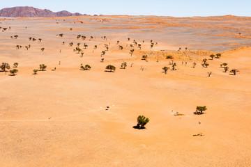 Luftaufnahme, bewachsene Dünen, Ausläufer der Namib-Wüste