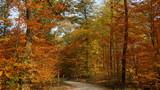 einsamer romantischer Weg führt durch bunten Laubwald im warmen Sonnenlicht - 230399195