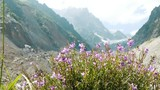 Wildflowers against the backdrop of a mountain landscape summer sway in the wind - 230410946