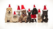 group of eight adorable santa cats and dogs with costumes