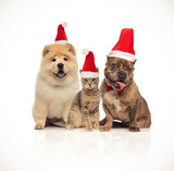 group of three cute pets with santa hats sitting - 230419377