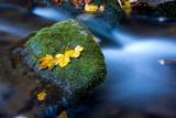 autumn maple leafs on wet stone - 230421518