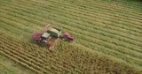 Aerial footage of corn harvest with combine and tractor on a fieldon a field - 230431153