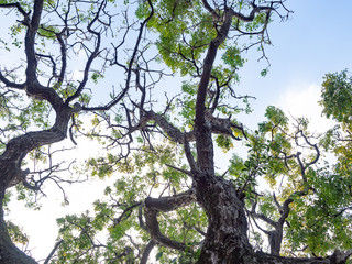 Big tree with sun light
