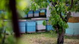 HD Close up view of back of beehives view from behind a tree - 230461585