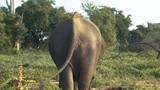 Wild and Free Elephants - 230476159