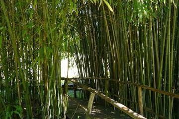 Weg durch Bambus © Falko Göthel