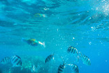 Red Sea underwater scenery with tropical fishes, Egypt - 230499190