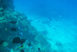 Red Sea underwater scenery with tropical fishes, Egypt - 230500788