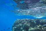Coral reef of Red Sea with tropical fishes, Egypt - 230503371