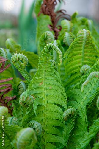 fern in forest - 230503715